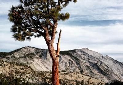 Cs15.dataditpubpublished20160225joythis.com_Different_view_from_Yosemite_National_Park_2160x2512_i.imgur_.com_Q19abC8_1024x768_stamped.jpg