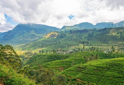 Cs15.dataditpubpublished20160225joythis.com_Tea_Plantation_in_Sri_Lanka2048x1367_i.imgur_.com_a5I4wr7_1024x768_stamped.jpg